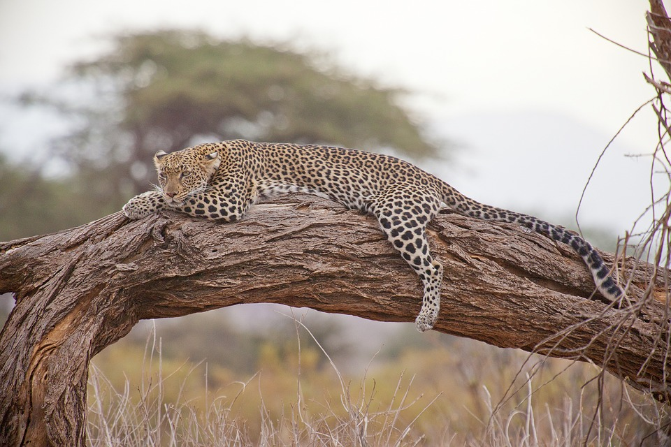 Best places for wildlife safaris in the world